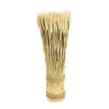 Botte épi blé Ø10cm h50cm