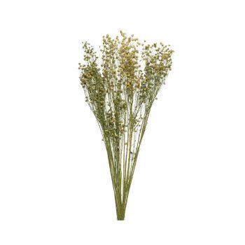 Botte fleur séchée 80cm
