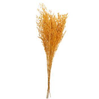 Bouquet broom séché 75-85cm safran