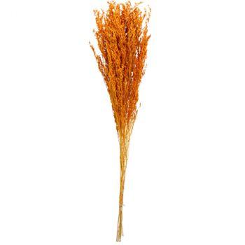 Bouquet broom séché 75-85cm terracotta