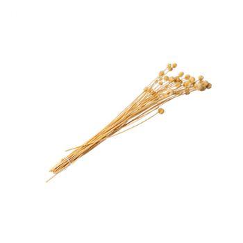 Bouquet chardon séché 70cm naturel
