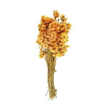 Bouquet fleurs séchées jaune 30cm