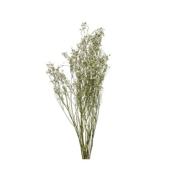 Bouquet gypse naturel séchée D10cm H60cm
