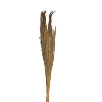 Bouquet pampa grassieux 110cm naturel