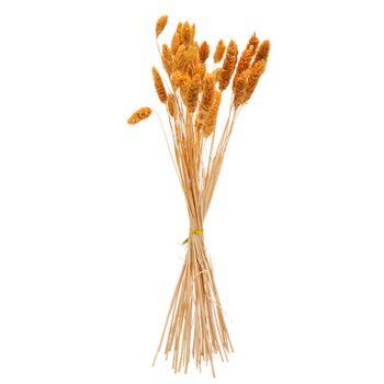 Bouquet phalaris 60cm x50 moutarde
