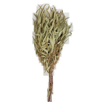 Bouquet saule pleureur 70cm