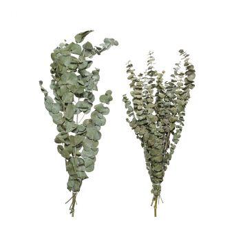Eucalyptus séché 70cm 2ass