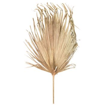 Feuille palmier sechée 120x70