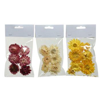 Fleurs séchées naturel 3 couleurs au choix