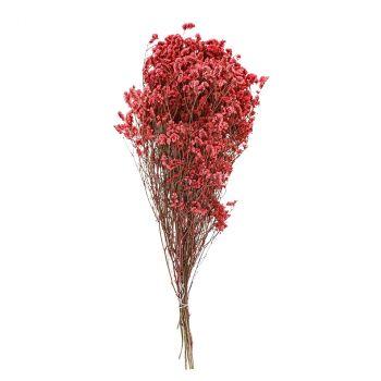Gysophile 60cm rose 50gr