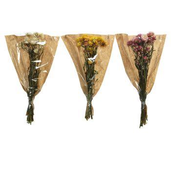 Helichrysum séché 50cm 3 modèles assortis