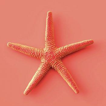 Lot de 20 serviettes étoile de mer 33cm