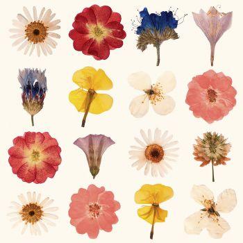 Lot de 20 serviettes fleur séchées 33cm