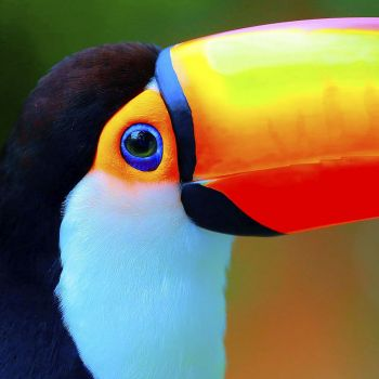 Lot de 20 serviettes toucan 33cm