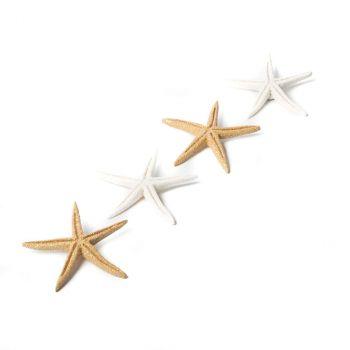 Lot de 6 étoiles de mer adhésives blanc 6,5cm